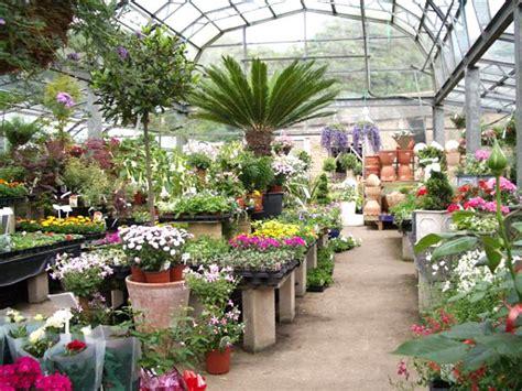nursery plants choosing the best indoor plants for your interior