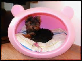 Cute Dog Beds For Small Dogs Creative Beds For Cats And Dogs It S A Pet S Life