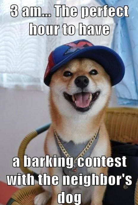 scumbag dog funny pictures quotes pics