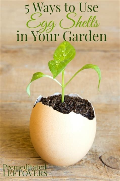 5 ways to use egg shells in your garden