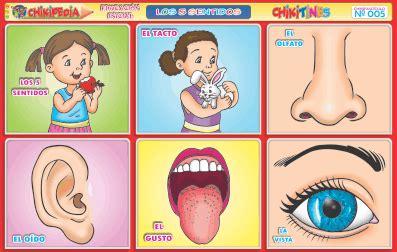 laminas educativas los 5 sentidos los 5 sentidos en laminas educativas chikipedia chikilines