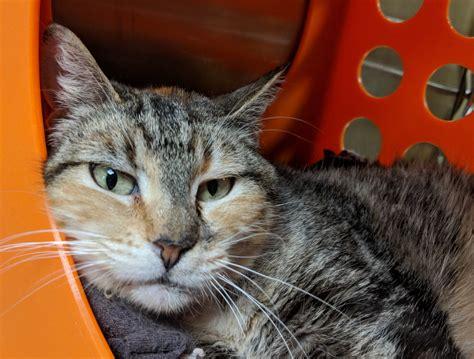 humane society  southwest washington pets   week