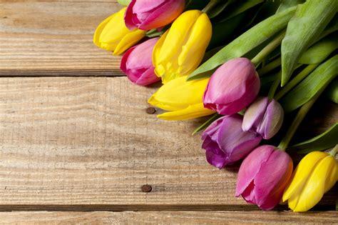 imagenes para fondo de pantalla de tulipanes banco de im 225 genes para ver disfrutar y compartir 22