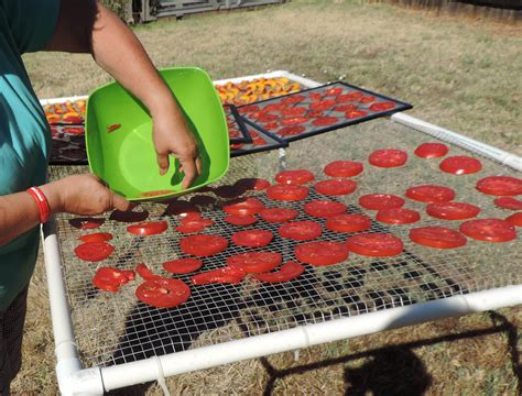 Tomato Racks by Drying Tomatoes Outdoors Preparedness Advicepreparedness