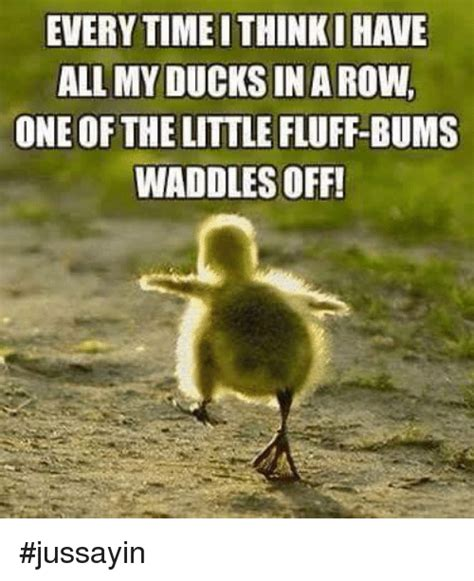 Duck Memes - 25 best memes about ducks in a row ducks in a row memes