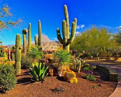 Desert Garden by Desert Garden Desert Landscape N Garden