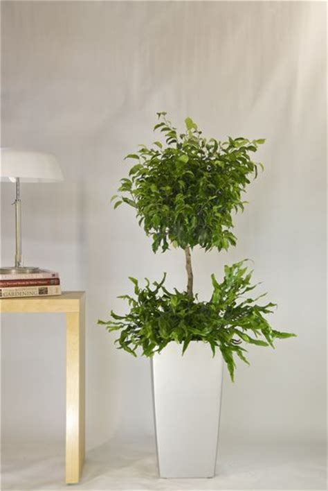 Houston Interior Plants by 29 Best Images About Interior Plant On Cinder