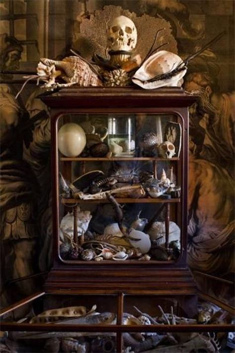 the cabinet of curiosities neiltortorella