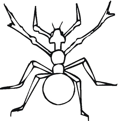 water bug coloring page water bugs page coloring pages
