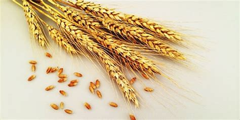 whole grains to lose weight include whole grains in your diet if you want to lose