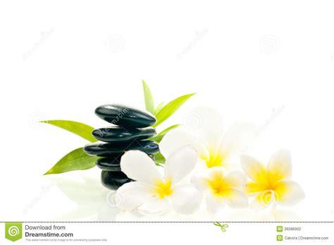 imagenes flores zen piedra negra del zen con las flores blancas