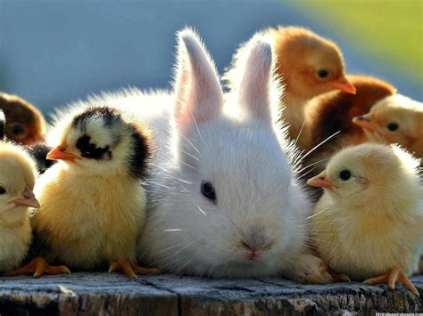cute rabbits and chicks product review archives binx parenting services albany