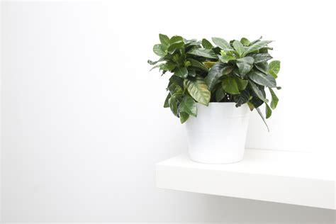 Pflanzen Im Schlafzimmer by Bildquelle 169 Focuslight