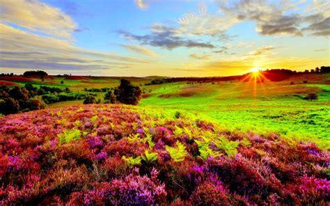 hd summer sunrise wallpaper