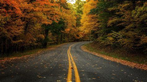 autumn forest road hd wallpaper wallpaper studio