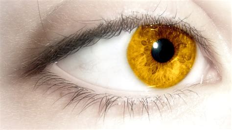 gold eye color gold eye color scars rsn scams now