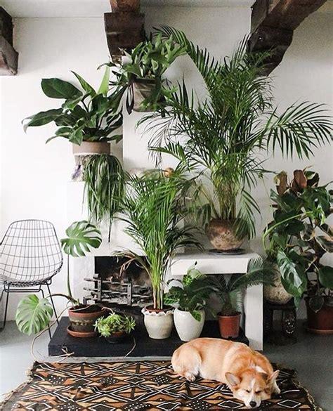 urban jungle schouw plants indoor plants interior plants