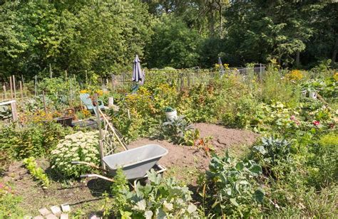 Garden Allotment Ideas Allotments Some Tips To Get You Started