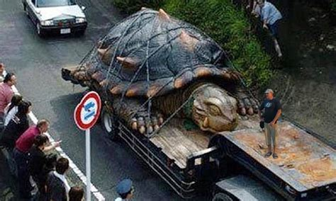 world s heaviest the worlds largest tortoise found in hoax ions