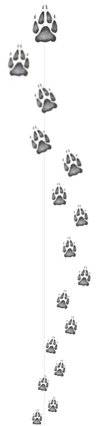 wolf paw print tattoo designs wolf paw print design by admin