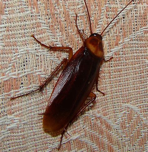 water beetle in house vancouver pest control tips tricks vancouver homes