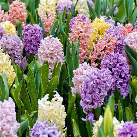Fleurs Odorantes Pour Balcon by Plantes Pour Balcon Liste Ooreka