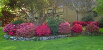 Low Growing Flowering Shrubs For Full Sun - how to grow azaleas today s homeowner