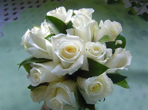 imagenes d erosas blancas rosas blancas related keywords rosas blancas long tail