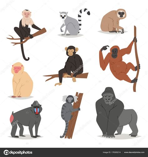Monkey Set monkey vector set animal macaque monkeyish