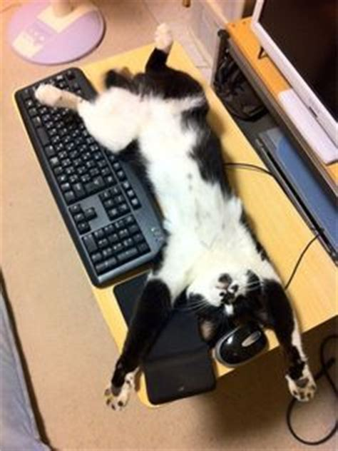 8 Places Cats Like To Sleep by 1000 Images About Cats On Computer Keyboards On