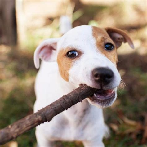 stop dogs  chewing wood dog insurance pets