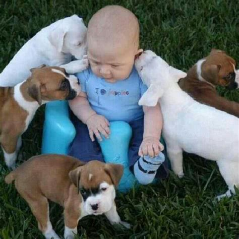 babies and puppies oh no babies and puppies again you don t want to see this