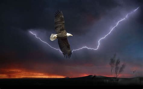 storm of eagles the kaufman wings like eagles