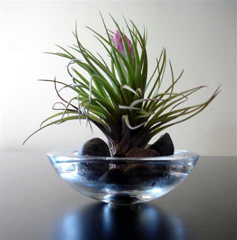 Flower Bowl Vases Alternatives To Flowers Terrariums With Air Plants And