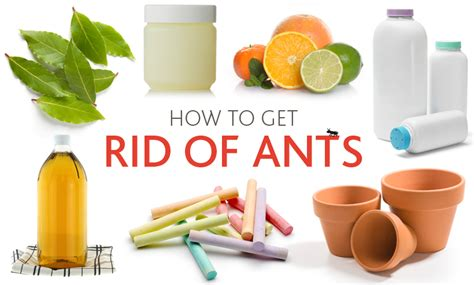how to get rid of ants in my bedroom 7 ways to eliminate ants using household items improvements
