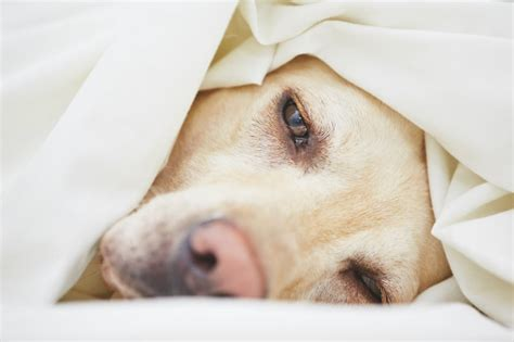 vomiting and diarrhea in dogs care for vomiting and diarrhea