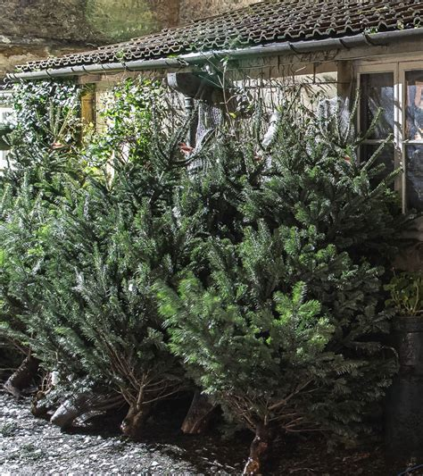 collection of start a christmas tree farm business