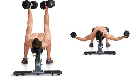 60 lb dumbbell bench press 60 lb dumbbell bench press 28 images 60 lb dumbbell