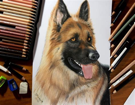 german shepherd puppy drawing colored pencil drawing of german shepherd by jasminasusak on deviantart