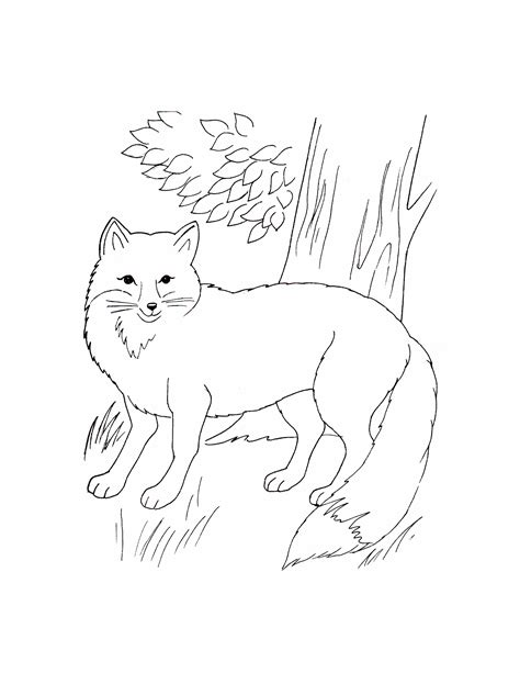 printable animals for toddlers coloring pages of wild animals kids coloring europe