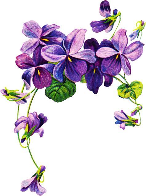 arts clipart violets cliparts
