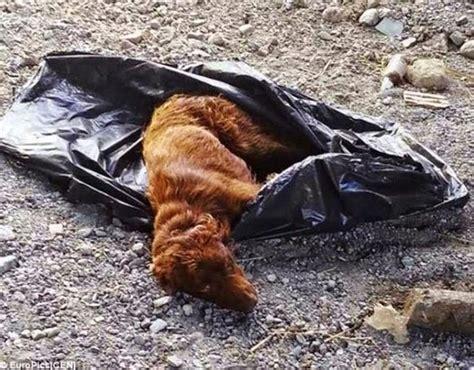 mujer se queda pegada con un perro por el culo zooskool review mujer pegada con un perro mujer se queda pegada con un