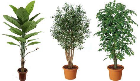 piante da arredo piante finte da arredo piante finte arredare con le