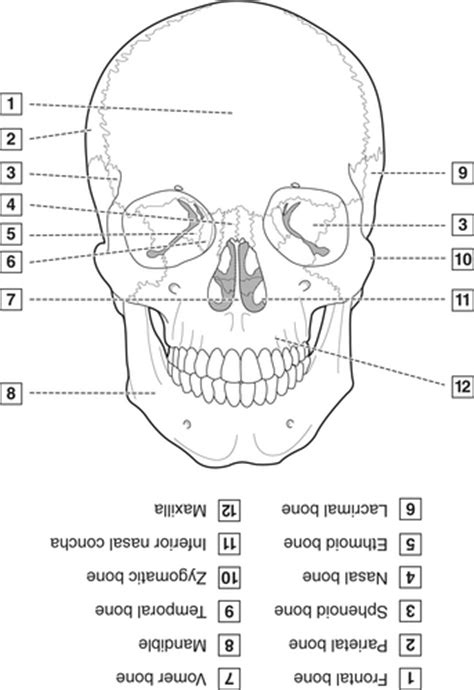 4: Head, Neck, and Dental Anatomy | Pocket Dentistry