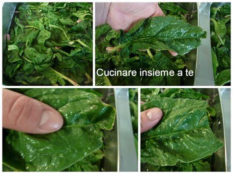 cucinare gli spinaci freschi come conservare gli spinaci freschi piccolo tutorial