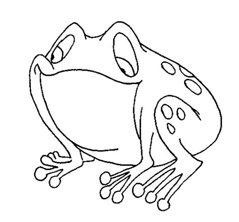 imagenes de sapos faciles para dibujar dibujo de sapo para colorear dibujos net