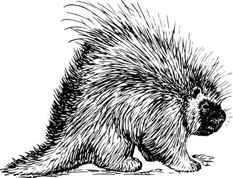 porcupine tattoo porcupine rodent clip at clker vector clip