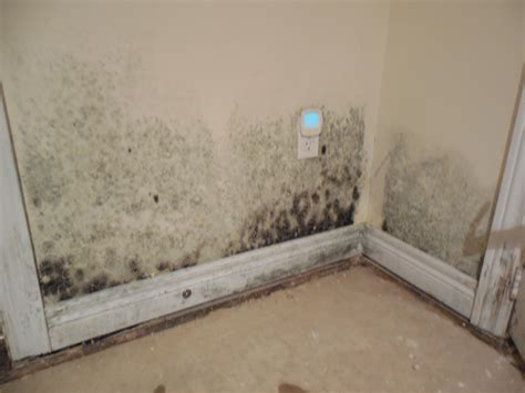 tips for effective mold prevention in hermitage tn all dry