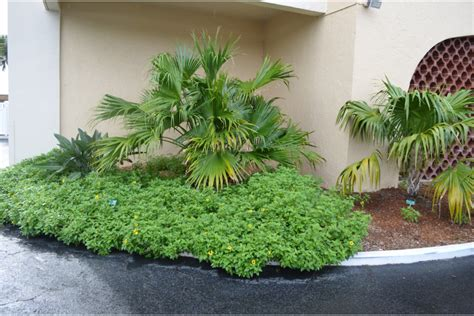 Lido Regency Goes Native With Florida Landscape Longboat Florida Landscape Plants