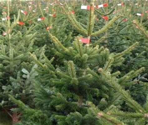 weihnachtsbaum preise christbaum preise agrar aktuell de